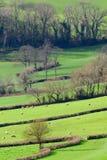 Ackerland in Blackdown-Hügel Stockfotos