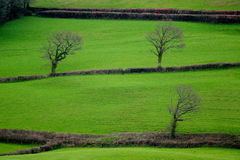 Ackerland in Blackdown-Hügel Lizenzfreie Stockfotos