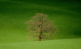 Ackerland in Blackdown-Hügel Lizenzfreies Stockfoto