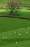 Ackerland in Blackdown-Hügel Lizenzfreie Stockbilder