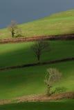 Ackerland in Blackdown-Hügel Stockbilder