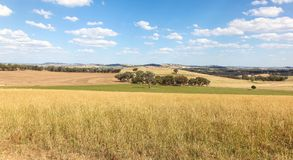 Ackerland - Cowra Australien stockfotografie