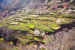 Ackerland in den Atlasbergen von Marokko Stockfotografie