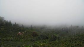 Ackerland in den Bergen in der Wolke Bali, Indonesien Stockfoto