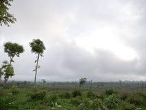 Ackerland in den Bergen in der Wolke Bali, Indonesien Lizenzfreie Stockbilder