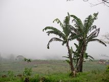 Ackerland in den Bergen in der Wolke Bali, Indonesien Stockbild