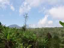 Ackerland in den Bergen in der Wolke Bali, Indonesien Stockfotos