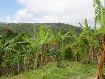 Ackerland in den Bergen in der Wolke Bali, Indonesien Lizenzfreie Stockfotografie