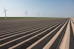 Ackerland in den Niederlanden, Wartefrühling Stockbild