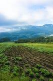 Ackerland an der Erntezeitlandschaft Feld mit Ernte Lizenzfreie Stockfotografie