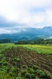 Ackerland an der Erntezeitlandschaft Feld mit Ernte Stockbild