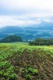 Ackerland an der Erntezeitlandschaft Feld mit Ernte Lizenzfreie Stockfotos