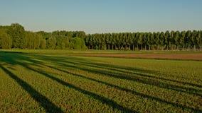 Ackerland in der flämischen Landschaft in evning Licht, mit Bäumen mit langen Schatten Lizenzfreie Stockbilder