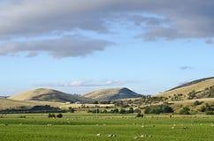Ackerland an der Kohle River Valley, Tasmanien Stockbild
