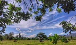 Ackerland in der Provinz - Grünpflanzen und Gräser und blaue Himmel Stockfoto