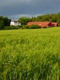 Ackerland in der weichen Leuchte. Lizenzfreies Stockfoto