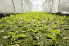 Ackerland des grünen Hauses Lizenzfreies Stockfoto