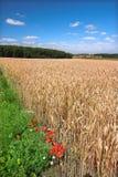 Ackerland in Deutschland Stockfotografie