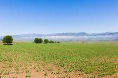 Ackerland-Ernte-Berge Lizenzfreies Stockbild