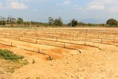 Ackerland für die Landwirtschaft. Stockbild