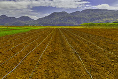 Ackerland für die Landwirtschaft Stockfotos