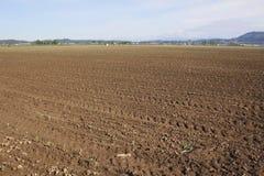 Ackerland für Gemüse Lizenzfreies Stockfoto