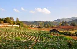 Ackerland-Feld auf Hügel in der Landschaft Stockfotos