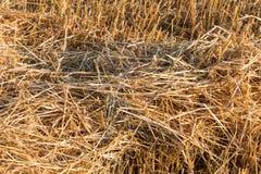 Ackerland-Felder Stockfoto
