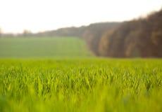 Ackerland am Frühling - flacher DOF Stockfotos