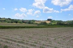 Ackerland gepflanzte Italien-Sojabohnen Stockfotografie