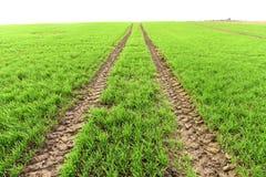 Ackerland, gepflogenes Feld am Frühling, Landschaft, landwirtschaftlich, Felder Lizenzfreies Stockfoto