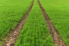 Ackerland, gepflogenes Feld am Frühling, Landschaft, landwirtschaftlich, Felder Stockfotografie