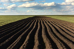Ackerland, gepflogenes Feld am Frühling, Landschaft, landwirtschaftlich, Felder Lizenzfreie Stockbilder