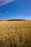 Ackerland in Germanay Lizenzfreie Stockfotografie