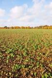 Ackerland-Getreide Stockfotos