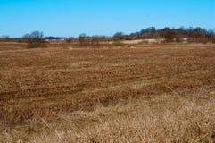 Ackerland, graue Kräne auf dem Gebiet, Kräne im Vorfrühling auf dem überwucherten Gebiet Stockfoto