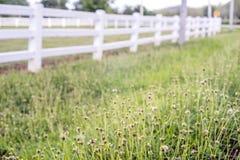 Ackerland-Hintergrund Lizenzfreies Stockbild