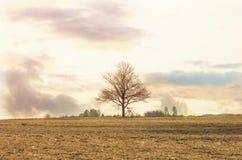 Ackerland im Frühjahr Glättung und ein großer Baum ohne Blatt Lizenzfreie Stockfotografie