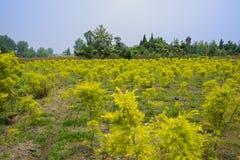 Ackerland im fruchtbaren Sommer Stockbilder