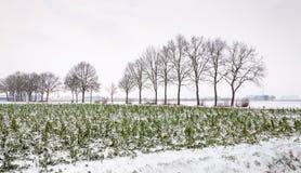 Ackerland im Schnee Lizenzfreie Stockfotografie
