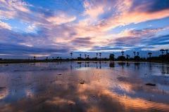 Ackerland im Sonnenuntergang Lizenzfreie Stockbilder