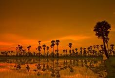 Ackerland im Sonnenuntergang Stockfoto