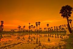 Ackerland im Sonnenuntergang Lizenzfreies Stockbild