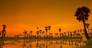 Ackerland im Sonnenuntergang Lizenzfreie Stockfotos