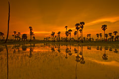 Ackerland im Sonnenuntergang Lizenzfreies Stockfoto
