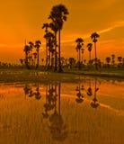 Ackerland im Sonnenuntergang Lizenzfreie Stockfotografie