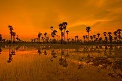 Ackerland im Sonnenuntergang Stockbilder