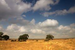Ackerland im Winter Stockbild
