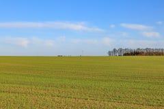 Ackerland im Winter Lizenzfreie Stockfotos
