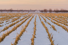 Ackerland im Winter Lizenzfreies Stockbild